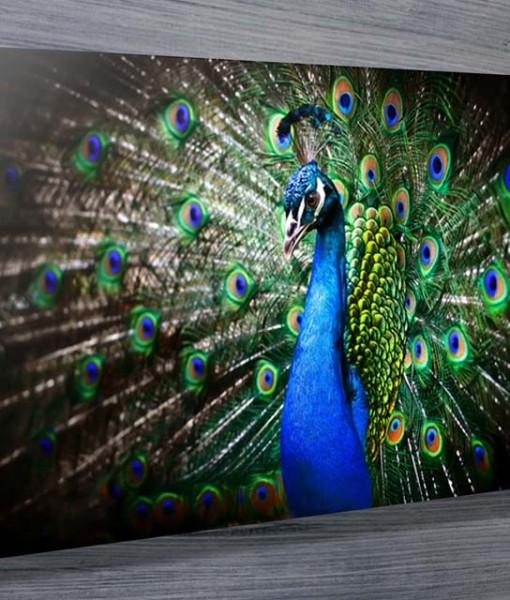 20140603224359Amazing_Peacock-art