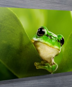 Curious-Frog-Stretched-canvas-print