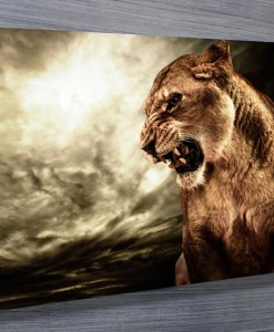 Tiger-Canvas-Wall-Art-Prints-Townsville
