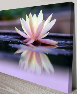 floating-beauty Floral Art Canvas Print