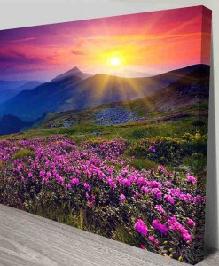 pink-fields-landscape Art Canvas Print