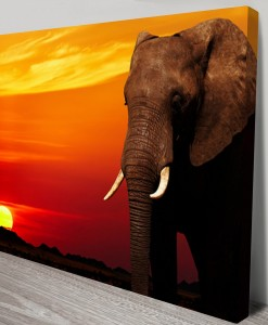 Elephant_Sunset
