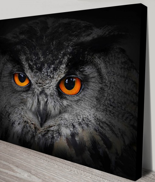Eyes-of-the-Owl