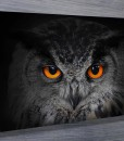 Eyes-of-the-Owl-Canvas-Prints