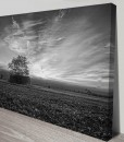 Field-and-barn-black-and-white