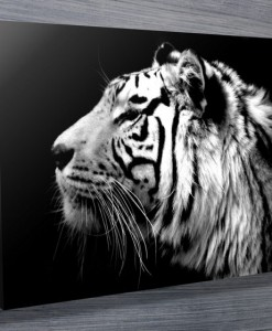 Tiger Black and White Canvas Print