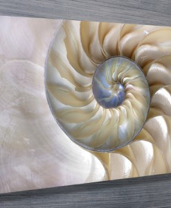 nautilus-shell-Abstract-Wall-Art
