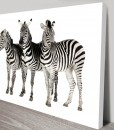 3-Zebras-wall-art