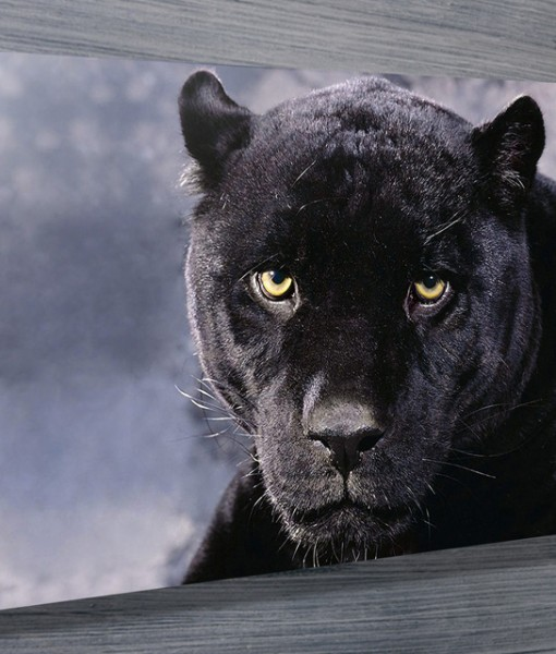 Black-Panther-wall-art-canvas-print