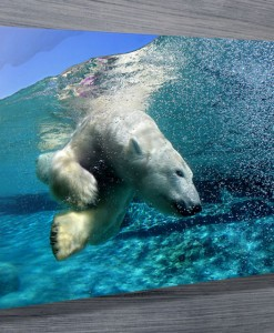 Polar-bear-canvas-prints