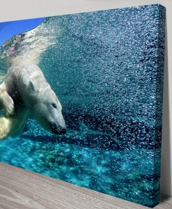 Polar_bear_diving