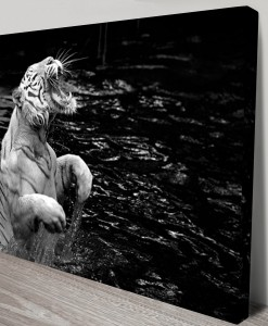 Roar-of-the-Tiger-Canvas-Artwork