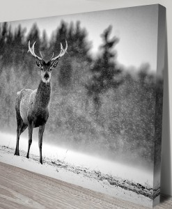 Stag-in-the-snow-s