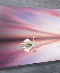 Swan at Sunset Wall Art Canvas Print