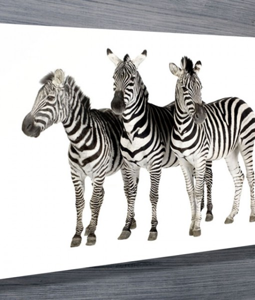 Zebras-Canvas-Wall-Art-Prints-Canberra-Queanbeyan