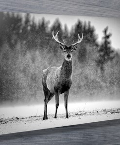 stag-in-the-snow-wall-art-canvas-print